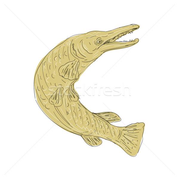 Aligator ryb pływanie w górę rysunek ilustracja Zdjęcia stock © patrimonio