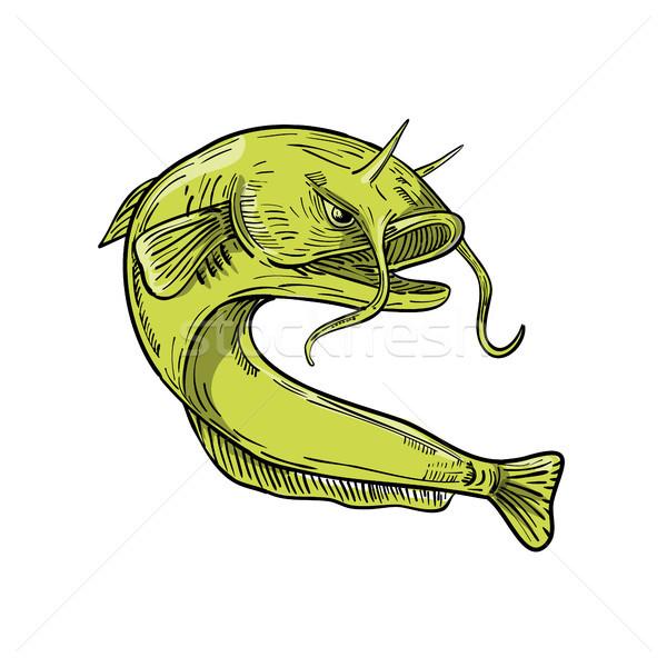 Devil Catfish Jumping Drawing Stock photo © patrimonio