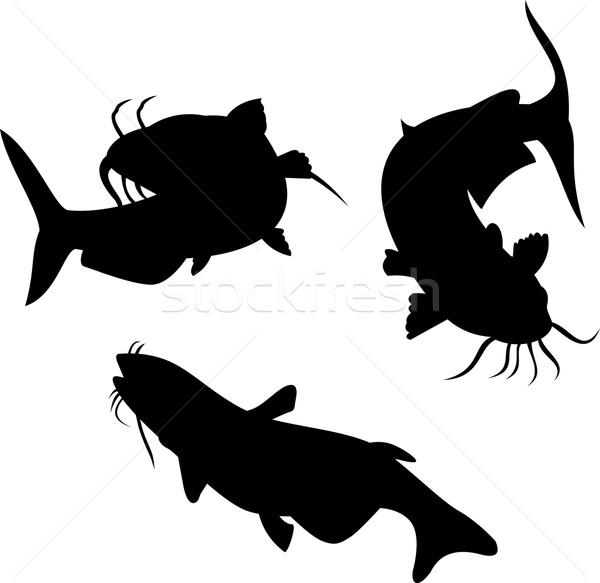 Catfish Silhouette Stock photo © patrimonio