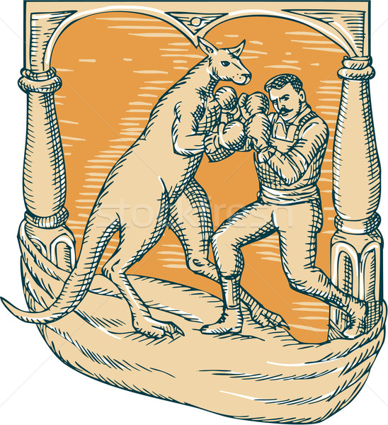 Stock photo: Kangaroo Boxing Man Etching