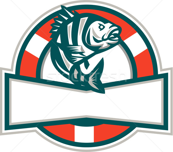 Sheepshead Fish Jumping Lifesaver Circle Retro Stock photo © patrimonio