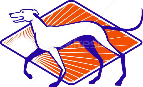 Galgo cão caminhada lado retro ilustração Foto stock © patrimonio