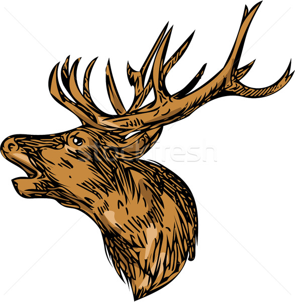 Red Deer Stag Head Roaring Drawing Stock photo © patrimonio