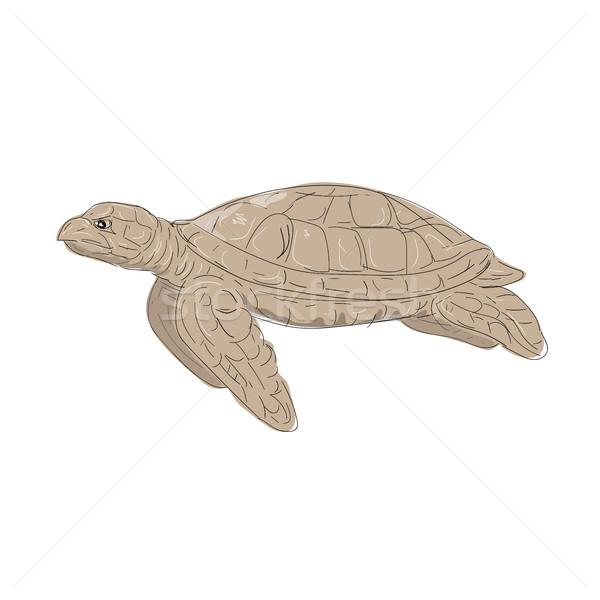 Stockfoto: Zee · schildpad · kant · tekening · illustratie · zwemmen