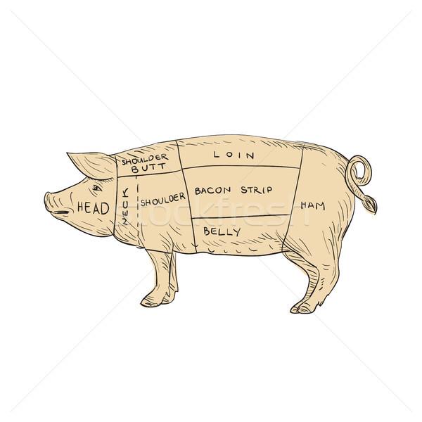 Vintage wieprzowina mięsa cięcia Pokaż rysunek Zdjęcia stock © patrimonio