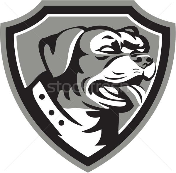 Rottweiler őrkutya pajzs feketefehér illusztráció fej Stock fotó © patrimonio