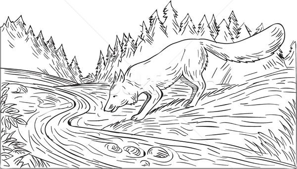 Fox Drinking River Woods Black and White Drawing Stock photo © patrimonio