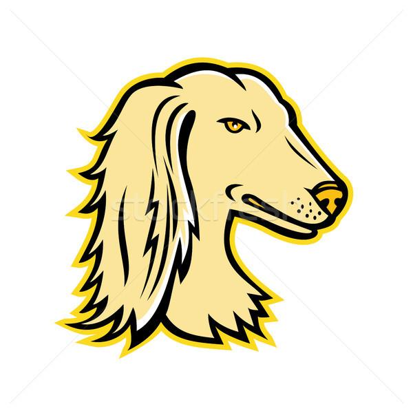 Saluki or Persian Greyhound Mascot Stock photo © patrimonio