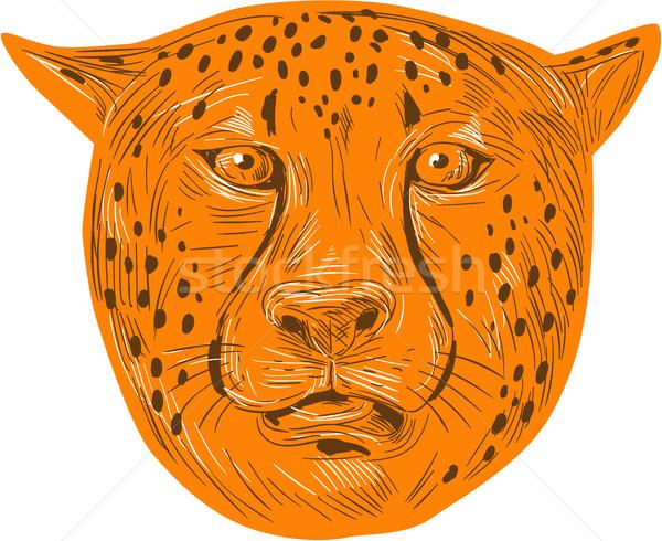 Gepárd fej rajz rajz stílus illusztráció Stock fotó © patrimonio