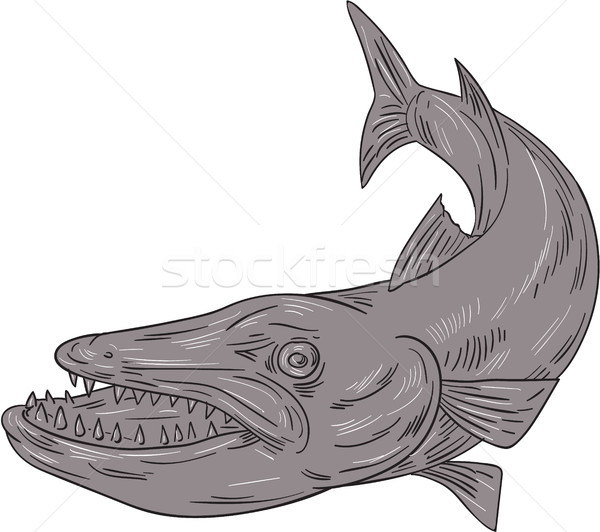 Barracuda Swimming Down Drawing Stock photo © patrimonio