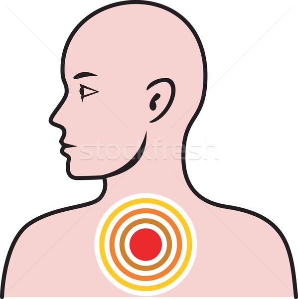 Masculino anatomia humana ilustração torso olhando Foto stock © patrimonio
