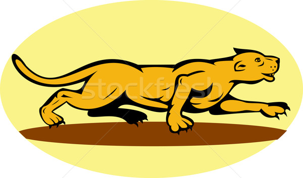 puma or mountain lion prowling Stock photo © patrimonio