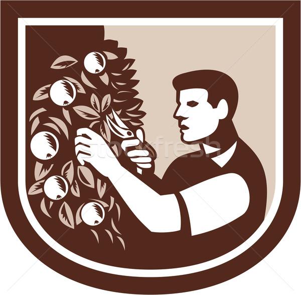 Grower Orchardist Gardener Pruning Tree  Stock photo © patrimonio