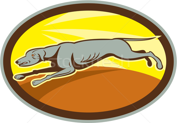 Greyhound Dog Jumping Side Oval Cartoon Stock photo © patrimonio