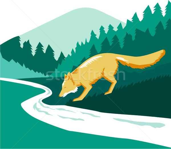 Fox potable río arroyo bosques cuadrados Foto stock © patrimonio