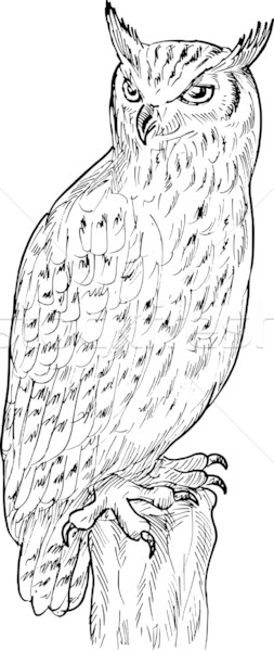 Eagle owl dessin main croquis illustration blanc noir Photo stock © patrimonio