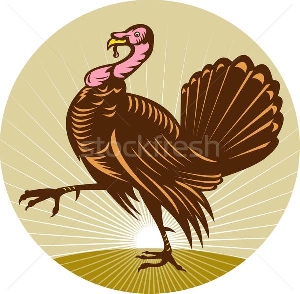 Wild turkey walking side view Stock photo © patrimonio