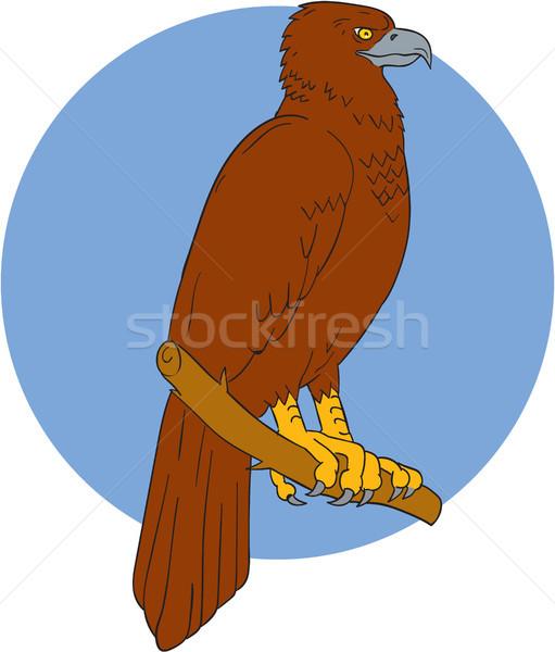 Australian Wedge-tailed Eagle Perch Drawing Stock photo © patrimonio