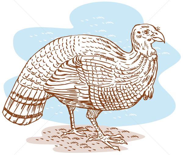 Turkey sketch side view Stock photo © patrimonio