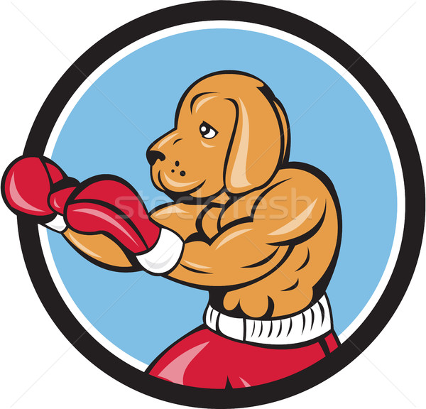 Hond bokser vechten houding cirkel cartoon Stockfoto © patrimonio