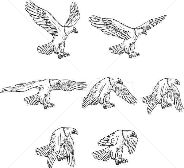 Bald Eagle Flying Drawing Collection Set Stock photo © patrimonio