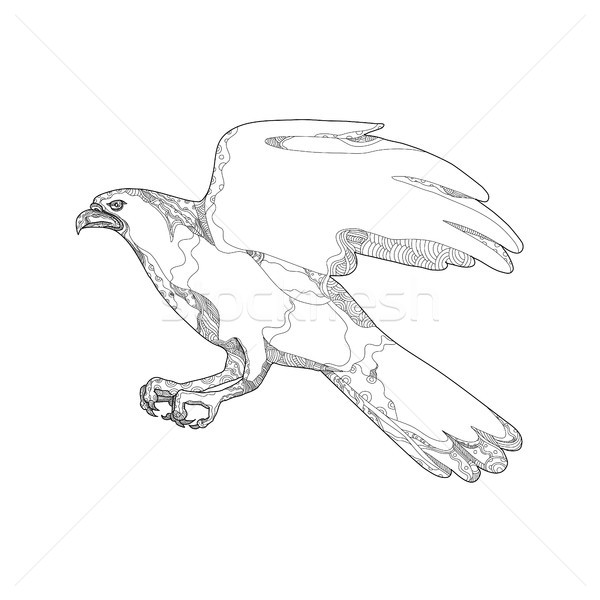 Northern Goshawk Swooping Doodle Art Stock photo © patrimonio