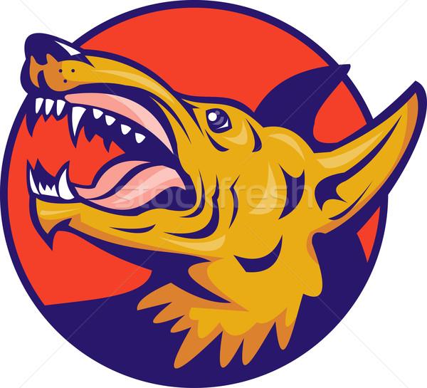 Mérges farkas vad kutya illusztráció szett Stock fotó © patrimonio