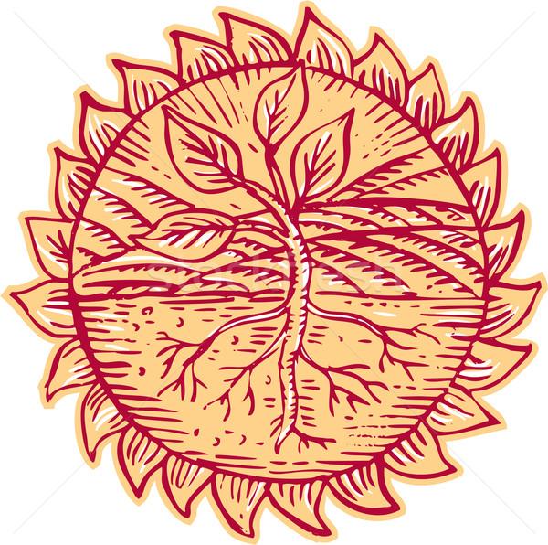 Plant Roots Field Sun Etching Stock photo © patrimonio