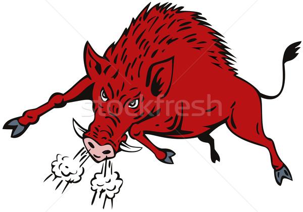 Wieprz skoki ilustracja wieprzowych dzik Zdjęcia stock © patrimonio