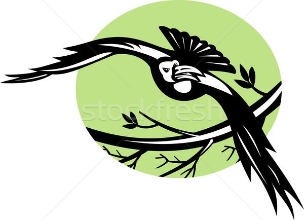 Raven bird flying with branch Stock photo © patrimonio