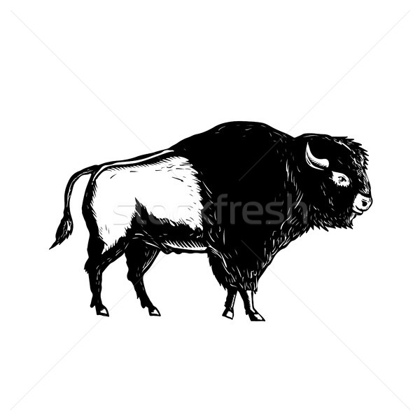 American Buffalo Side Woodcut Black and White Stock photo © patrimonio