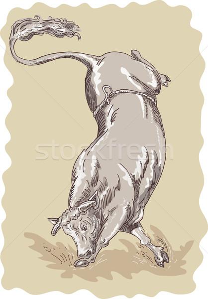 Bucking bull Stock photo © patrimonio