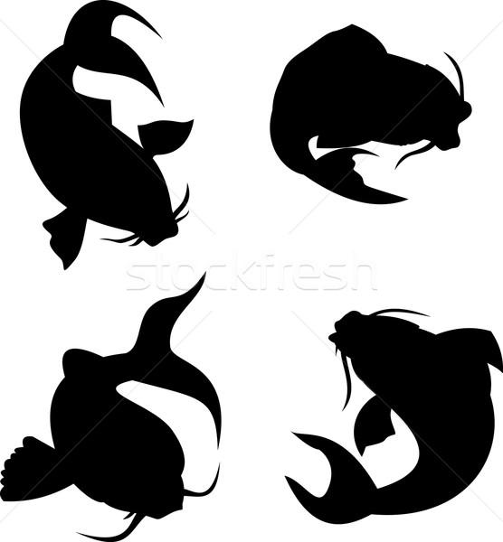 ニシキゴイ 鯉 シルエット 実例 セット 白 ストックフォト © patrimonio
