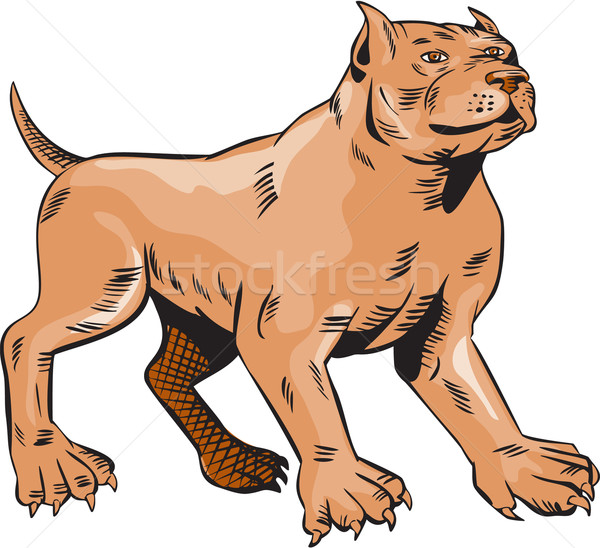 Pitbull Dog Mongrel Standing Etching Stock photo © patrimonio