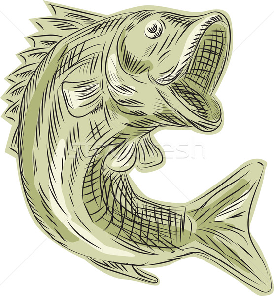 Largemouth Bass Fish Etching Stock photo © patrimonio