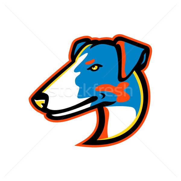 Fox terrier mascotte icona illustrazione testa Foto d'archivio © patrimonio