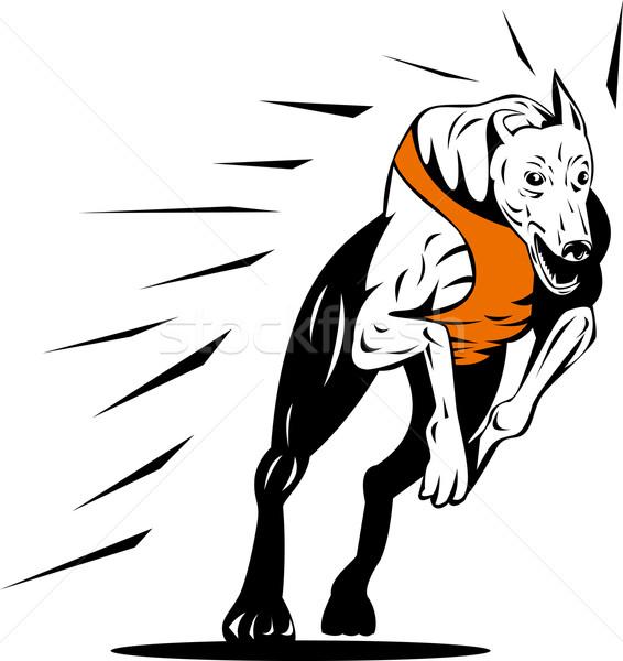 Galgo perro carreras retro ilustración estilo retro Foto stock © patrimonio