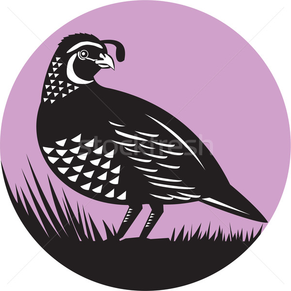California Valley Quail Bird Circle Retro Stock photo © patrimonio