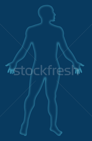 Male Human Anatomy Outline Blue Stock photo © patrimonio