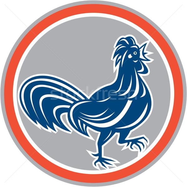 Chicken Rooster Walking Circle Retro Stock photo © patrimonio