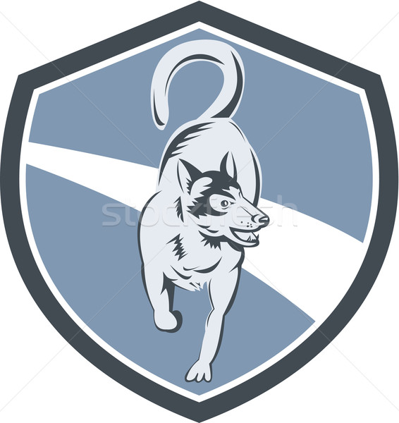 Husky Dog Crest Retro Stock photo © patrimonio