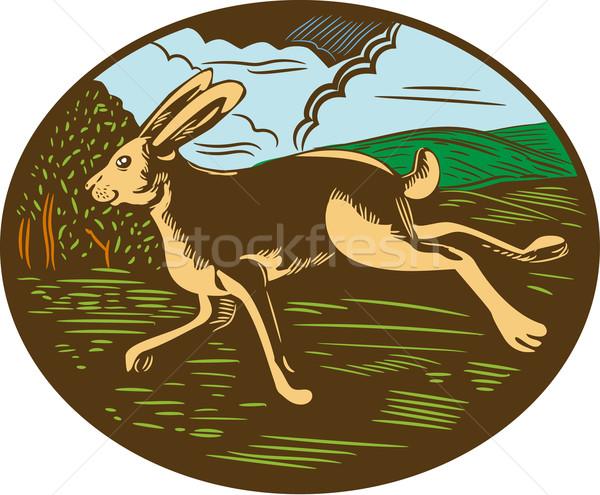 Hase Kaninchen läuft oval Illustration Stock foto © patrimonio