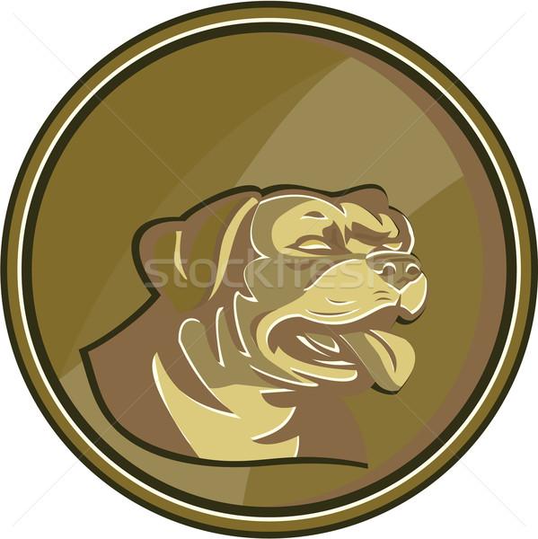 Rottweiler őrkutya fej arany medál retro Stock fotó © patrimonio
