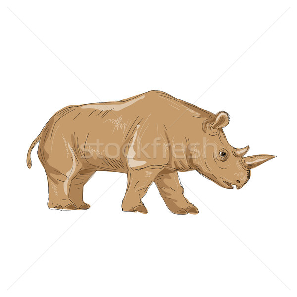 Northern White Rhinoceros Side Drawing Stock photo © patrimonio