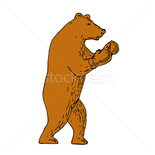 Brown Bear Boxing Stance Drawing Stock photo © patrimonio