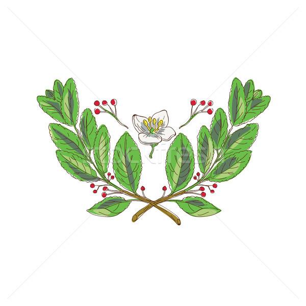 мат цветок лист фрукты рисунок эскиз Сток-фото © patrimonio