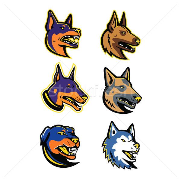 Wache Hunde Maskottchen Sammlung Set Symbol Stock foto © patrimonio