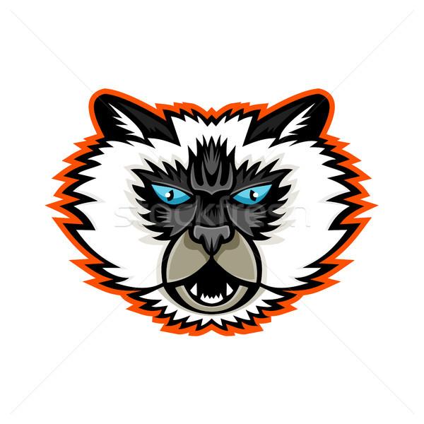 Gato mascote esportes ícone ilustração cabeça Foto stock © patrimonio