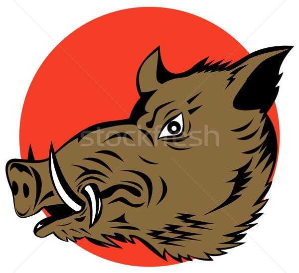 Porco javali cabeça ilustração isolado Foto stock © patrimonio
