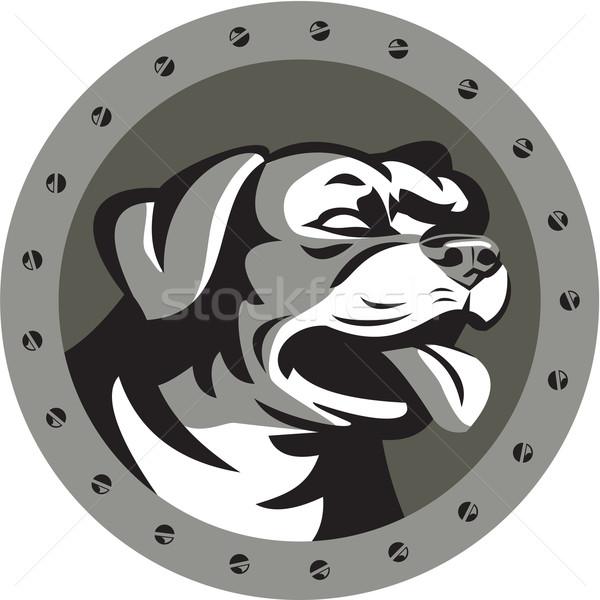 Rottweiler őrkutya fej fémes kör retro Stock fotó © patrimonio